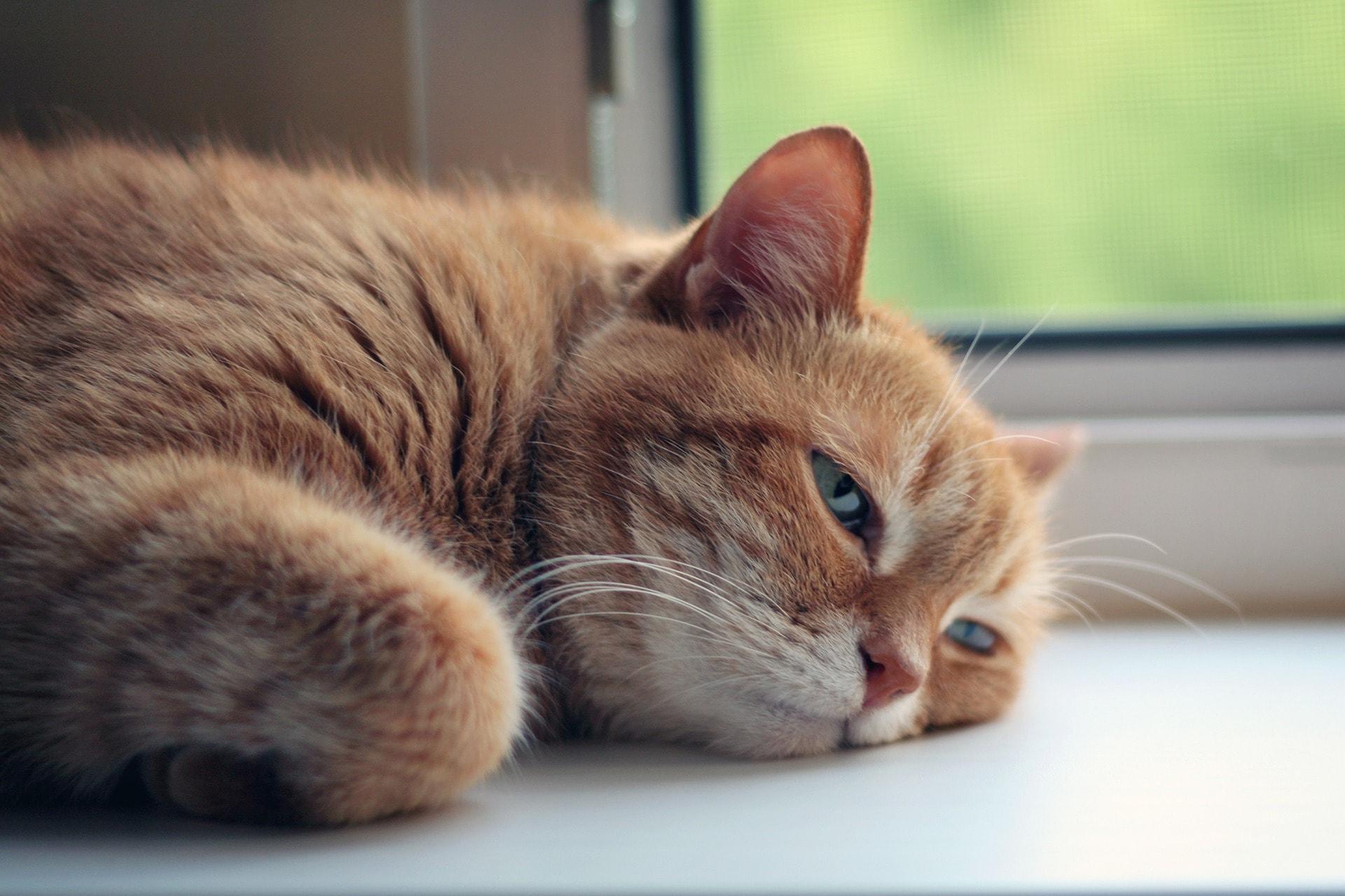 Amikor nem megy a munka – avagy hogyan profitáljunk a kánikulából